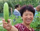 农村菜园子