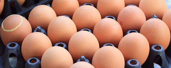 大商所2018鸡蛋产业调研