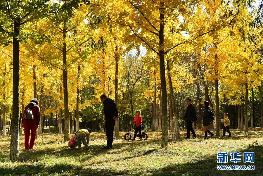 游客在北京通州大运河森林公园游玩(2018年10月27日摄)。2016年,通州被赋予新的历史定位——北京城市副中心,迎来历史性发展机遇。新华社记者 罗晓光