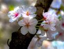 春分――春天的气息
