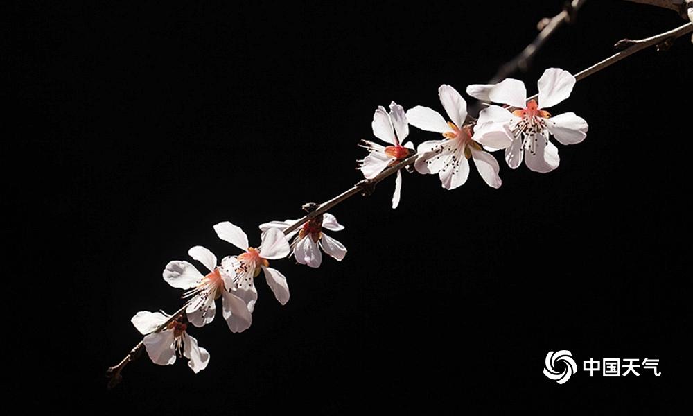 初春近观春花之美