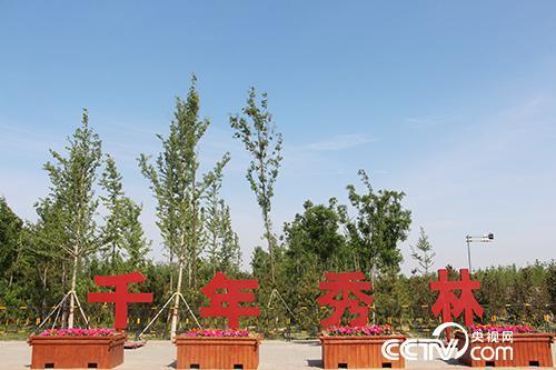 """如今,""""千年秀林""""已造林17万亩、植树1200余万株。(徐辉/摄)"""
