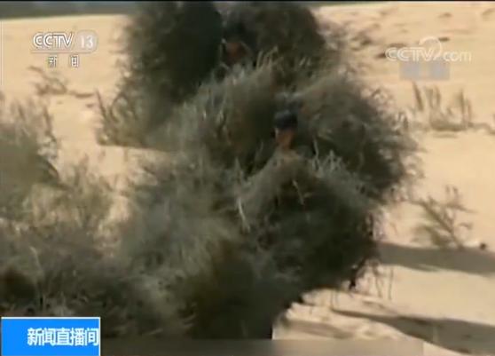 一开始根本谈不上种树。天热时,地表温度高达五六十度。风大时,七到八级大风能把60公分长的沙柳连根拔起。人们把柴草、树枝等做成沙障墙,削弱风力,固定沙丘,年复一年种植沙蒿等固沙植物。经过近20年的努力,到了70年代沙进人退终于得到遏制。第二代造林人开始种植适合在沙地生长的樟子松。