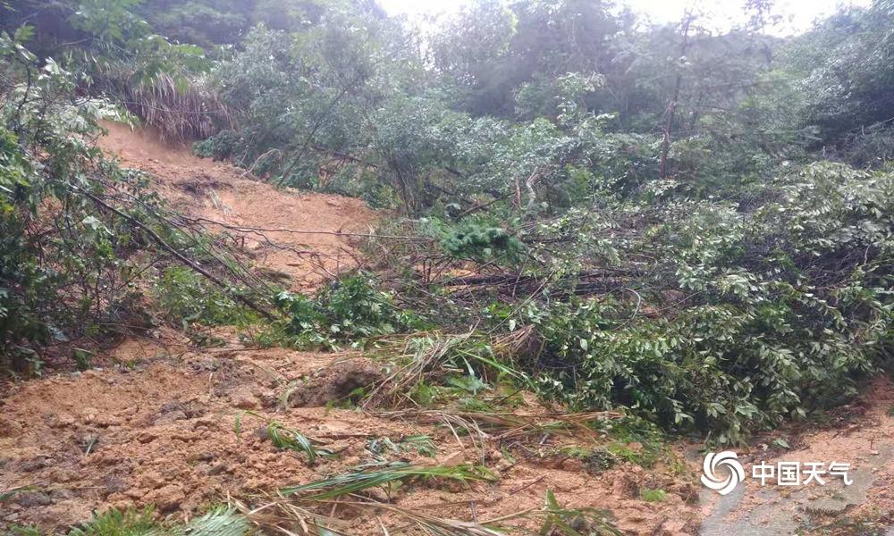 福建暴雨如注 局地积水严重树木倒塌