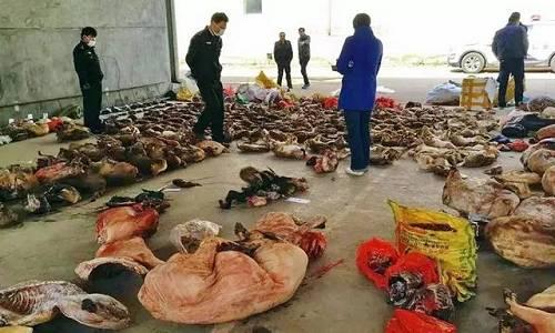 1.7万只!江西办史上最大贩卖野生动物案猎物现场。资料来源:森林公安