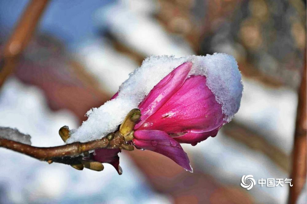 寒潮影响下的北方:雨雪纷飞 局地降温20℃