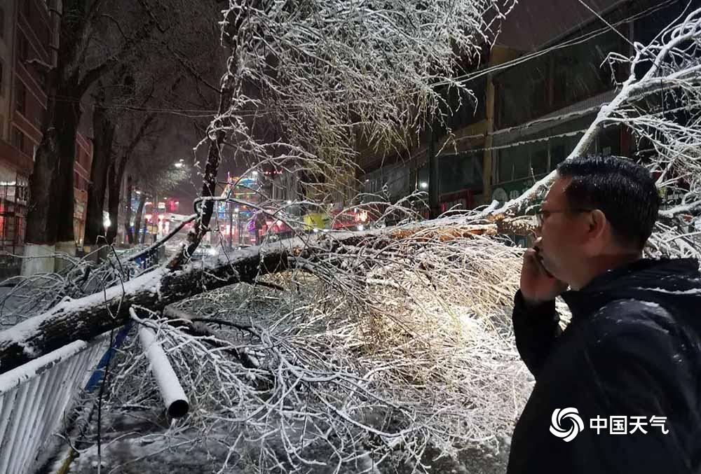 青海贵南遭遇近十年5月少见暴雪 多处树枝被雪压断