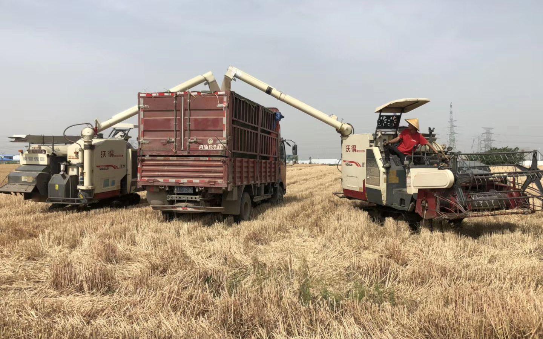 芒种时节忙收也忙种 陕西小麦收完这一茬等待种玉米