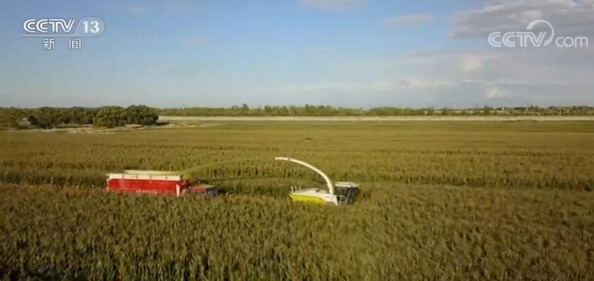 世界粮食日 | 中国粮食安全有保障 为世界作出积极贡献