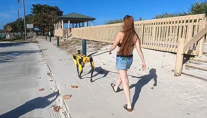 美国佛罗里达州一女子在海滩上遛价值49万的机器狗