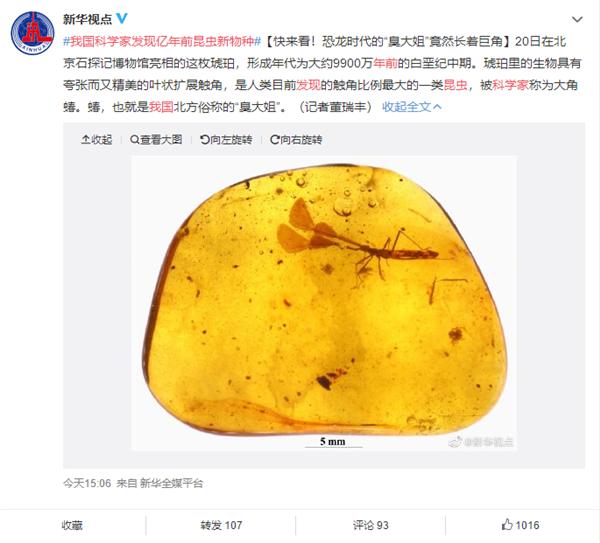 """亿万年前""""大角怪""""首次亮相!中国科学家发现昆虫新物种"""