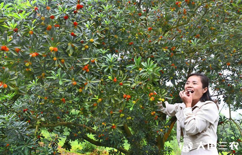 江西永丰:绿色产业促增收