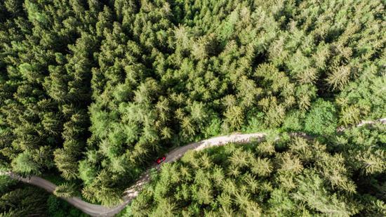 摩根大通豪买170万英亩林地:希望成碳抵消市场积极参与者!利用森林捕获和储存大气中二氧化碳
