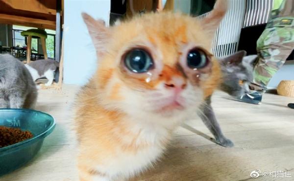 不忍看 猫咖半月无人管沦为猫咪地狱:猫混种生育、屎蝇横飞