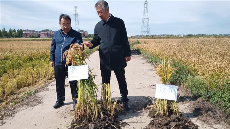 改良土壤、秸秆还田、低温寒地带旱稻直播中医农业防控与治理的技术创新