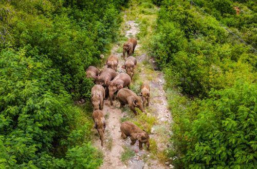 象群北迁背后的中国生物多样性保护:生态红线制度受国际关注,寻找发展与保护的平衡点