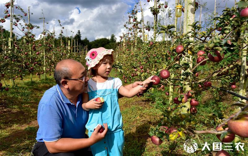"""云南弥勒:""""农旅结合""""发展绿色生态种植"""